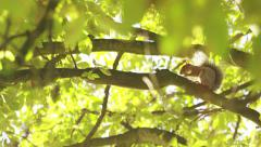 4K Reveal of a squirrel in a tree nibbling on a nut, shot on Red Epic Dragon - stock footage