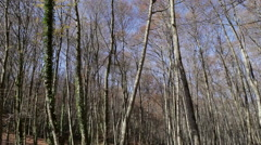 Nature landscape of this great beech forest in winter. Stock Footage