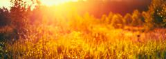Autumn Grass Meadow Close-Up With Bright Sunlight. Sunny Spring - stock photo