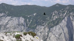 4k Alpine choughs couple flying Austria alps mountain Loser Stock Footage
