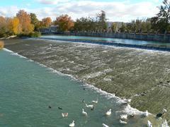 Ducks in Tagus river Stock Photos