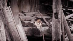 Cat among wooden trunks - stock footage