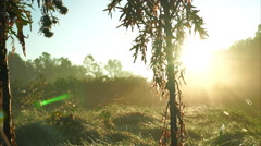 Camera moving up along thistle to the sky with foggy meadow in background Stock Footage