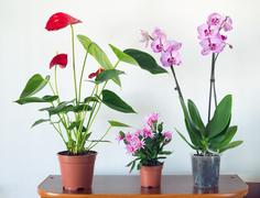 Live potted plants in pots at  interior - stock photo