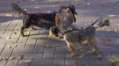 Dogs walking in park with their masters, playing, fooling, slow motion. Stock Footage