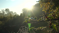 Dew covered spiderweb at sunrise - stock footage