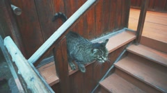 Domestic cat on the wooden stairs Stock Footage