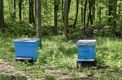 Part of apiary  with  view toward  hive - stock photo