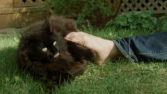 Male black cat playing with barefoot men in grass garden Stock Footage
