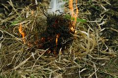 Ignition of dry grass - stock photo