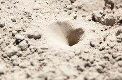 Insect traps in the sand Stock Photos