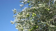 Ronda Olives Wind - stock footage
