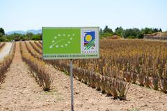 MALLORCA, SPAIN - JUNE 1: The organic farm for Aloe vera growing on June 1, 2 Stock Photos