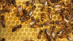 Work bees in hive Stock Footage