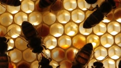 Work bees in hive - stock footage