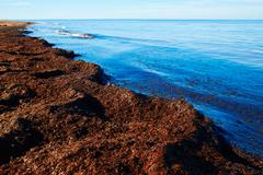 Stock Photo of Mediterranean Posidonia beach in alicante Denia at Spain