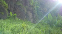 Stock Video Footage of Waterfall mist and plants sun flair