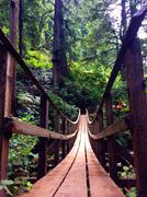 Wooden bridge in evergreen forest Stock Photos
