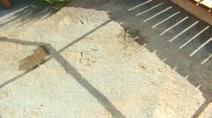 Dinosaur tracks BLM land moab Stock Footage