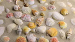 Approximation of sea shells  lying on the sand, top view Stock Footage