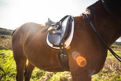 Thorough bred horse with saddle Stock Photos