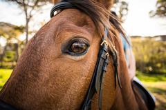 Thorough bred horse looking at camera Stock Photos