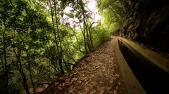 Levada on Madeira, Portugal Stock Footage