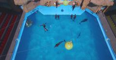 Flying above the dolphinarium during the show Stock Footage
