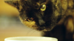 Cat Eating out of a Bowl 2 Stock Footage