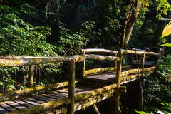 Ang Ka Nature Trail at Doi Inthanon National Park Stock Photos