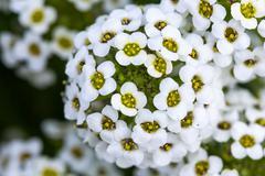 Beautiful flower at Doi Inthanon Stock Photos
