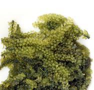 Sea grape seaweed, uni budou. japanese seaweed - stock photo