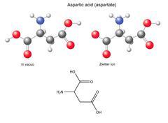 Aspartic acid (Asp) - chemical structural formula and models - stock illustration