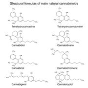 Chemical formulas of natural cannabinoids on white background - stock illustration