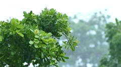 tree in depression storm in Thailand - stock footage