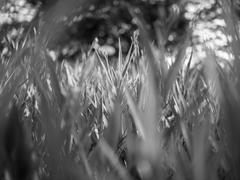 Fresh green grass in the park in black and white mode - stock photo