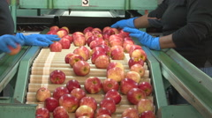 Apples being sorted  Stock Footage