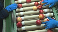 Apples being sorted in a packing shed Stock Footage