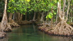 Turquoise green water stream flowing through the mangrove forest Stock Footage