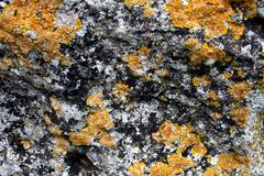 Big stone with hryzhe-yellow spots on the surface. Stock Photos