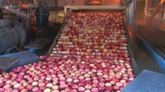 Apples on water dump elevator Stock Footage