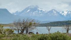 Epic Tierra del Fuego Mountains Background with Pengiuns in Foreground Stock Footage