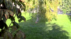 Having watered for a kitchen garden Stock Footage
