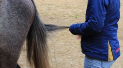 The girl combing horse tail Stock Footage