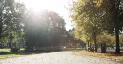Slow motion forward tracking shot beautiful trees autumn sunshine Stock Footage