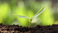 Young plant in the soil Stock Footage