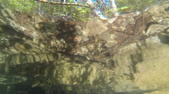 Low-angle shot of perch swimming near water surface Stock Footage