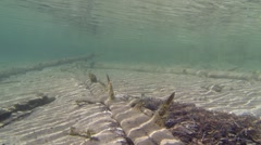 Sunken trees in shallow water with sand bottom Stock Footage