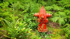 Red Fire Hydrant in Lush Forest of Green Ferns Stock Photos