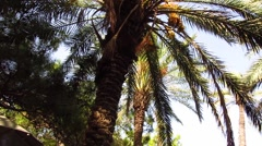 Wind rustles branches of palm trees - stock footage
